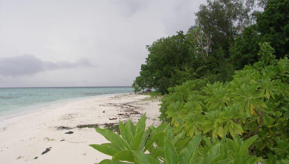 Plum Pudding Island